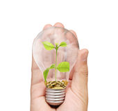 Energy saving light bulb, Creative light bulb idea in hand Stock Images