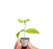 Energy saving light bulb, Creative light bulb idea in hand Royalty Free Stock Photos