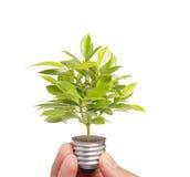 Energy saving light bulb, Creative light bulb idea in hand Royalty Free Stock Photography