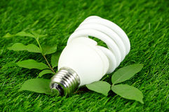 Energy Saving Light Bulb and Green Environmental Concept. Royalty Free Stock Image