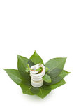 Energy saving light bulb on green leaves Royalty Free Stock Photo