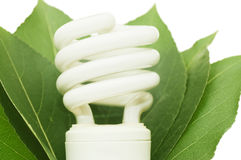 Energy saving light bulb on green leaves. Isolated over white Royalty Free Stock Image