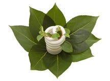 Energy saving light bulb on green leaves Royalty Free Stock Image