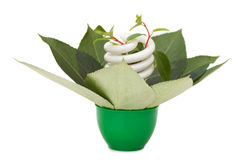 Energy saving light bulb on green leaves. Isolated over white Royalty Free Stock Photo