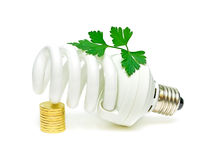 Energy saving light bulb and a green plant Royalty Free Stock Image
