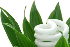 Energy saving light bulb on green plant Royalty Free Stock Photo