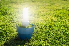 Energy saving light bulb Stock Photo