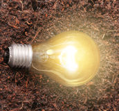 Energy saving light bulb Stock Images
