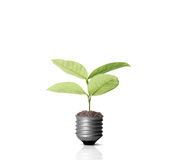 Energy saving light bulb. Ideas, energy saving light bulb stock photography