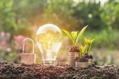 Energy saving light bulb with lock and tree growing Stock Photos