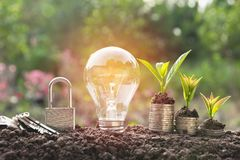Energy saving light bulb with lock and tree growing Royalty Free Stock Image