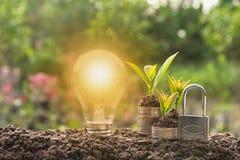 Energy saving light bulb with lock and tree growing Stock Photo