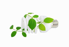 Energy saving light bulb and plant Royalty Free Stock Photography