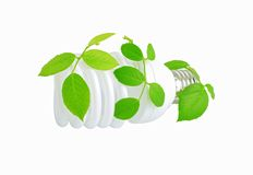 Energy saving light bulb and plant Royalty Free Stock Image