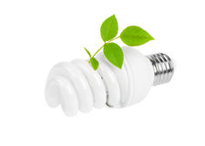 Energy saving light bulb and plant Royalty Free Stock Photos