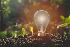 Energy saving light bulb and tree growing. On nature background Stock Images