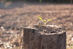 Energy saving light bulb and tree growing. On nature background Stock Photos