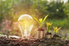 Energy saving light bulb and tree growing on stacks of coins Royalty Free Stock Image