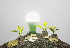 Energy saving light bulb and tree growing on stacks of coins on Royalty Free Stock Photos