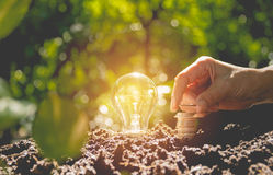 Energy saving light bulb and tree growing on stacks of coins Royalty Free Stock Photography