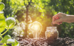 Energy saving light bulb and tree growing on stacks of coins Stock Photography