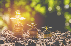 Energy saving light bulb and tree growing on stacks of coins Stock Photo