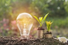 Energy saving light bulb and tree growing on stacks of coins Royalty Free Stock Photo