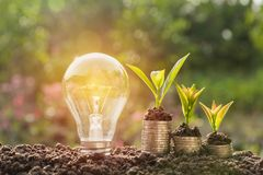 Energy saving light bulb and tree growing on stacks of coins Stock Photos