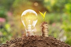 Energy saving light bulb and tree growing on stacks of coins on. Nature background. Saving, accounting and financial concept Royalty Free Stock Photo