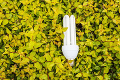 Energy saving light bulbs and green leaves Stock Photography