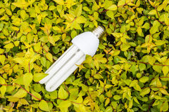 Energy saving light bulbs and green leaves Royalty Free Stock Photography