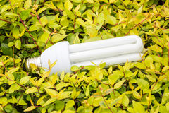 Energy saving light bulbs and green leaves Royalty Free Stock Images