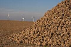 Energy, sugar beets and wind turbines Stock Images