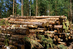 Energy Wood. A stack of energy or fuel wood of eg. birch, spruce and pine with forest in the background Stock Image