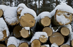 Energy wood. Snow covered pile of energy wood (birch royalty free stock images