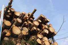 Energy Wood by the Truck Load royalty free stock photos