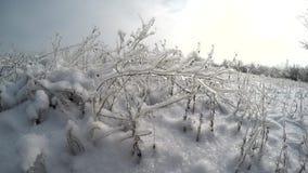 Enero frío almacen de video