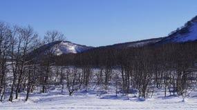 Enero, vigésimo sexto, 2019 - bosque del invierno en la ciudad de Vilyuchinsk, península de Kamchatka, Rusia foto de archivo libre de regalías