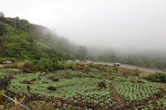 Enevoado bonito sobre a exploração agrícola da couve na montanha imagens de stock