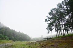 Enevoado e chovendo na manhã em Pang Ung em Mae Hong Son Fotos de Stock