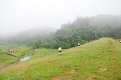 Enevoado e chovendo na manhã no grande reservatório de A em Pang Ung Imagens de Stock Royalty Free