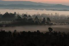 Enevoe a coberta das florestas da montanha na manhã Foto de Stock Royalty Free