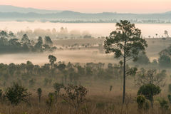 Enevoe a coberta das florestas da montanha na manhã Imagens de Stock