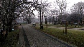Enevoe no parque na manhã fria do outono imagens de stock royalty free