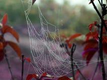 Enevoe no spiderweb no pulo e na árvore em uma manhã adiantada do inverno Fotos de Stock