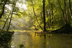 Enevoe sobre o córrego na floresta do outono Fotos de Stock