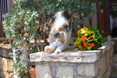 Enfärgad katt sträcker nära en härlig bröllopbukett som vilar på ett stenstaket Arkivbilder