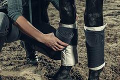 Enfaixando os pés do ` dos cavalos com uma atadura foto de stock