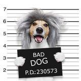 Enfaldig hundmugshot för Nerd arkivfoto