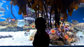Enfant à l'aquarium Photo libre de droits